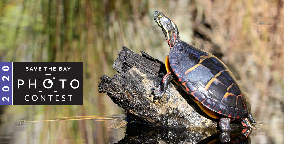 A turtle suns itself on a log.