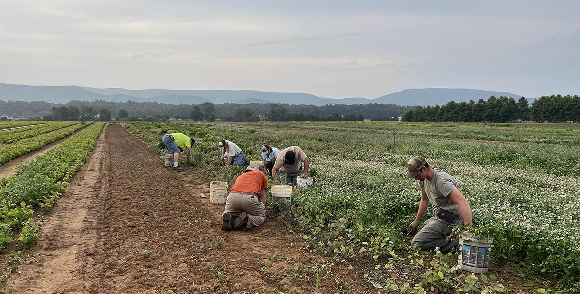 Augusta-Forestry-Center_seedling-weeding_Sarah-Coffey_1171x593