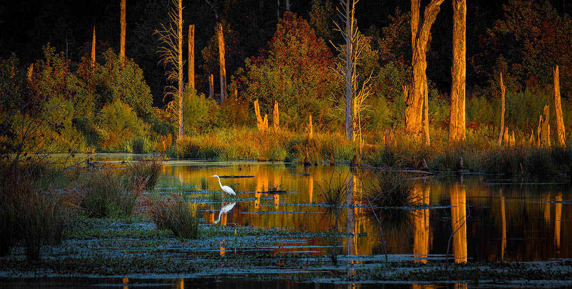 Egret-Sunset-Potomac-River-Marsh-Caledon-State-Park_Edward-Episcopo_1171x593