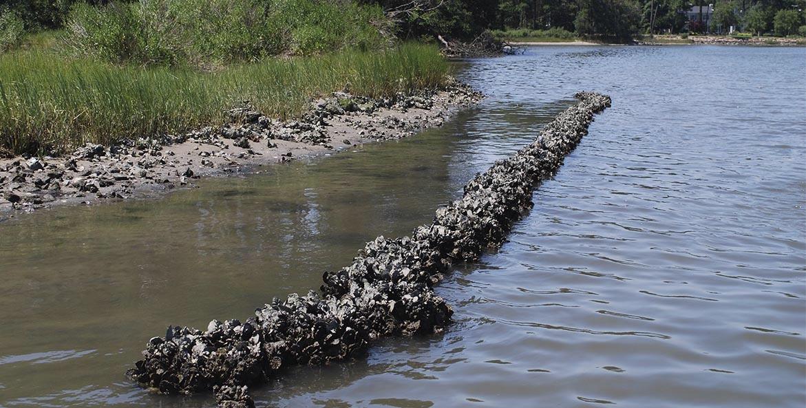 Hamptn-Roads-REST-4018-Oyster-reefs-Elizabeth-River_Dr-Lisa-Drake-2-1171x593.jpg