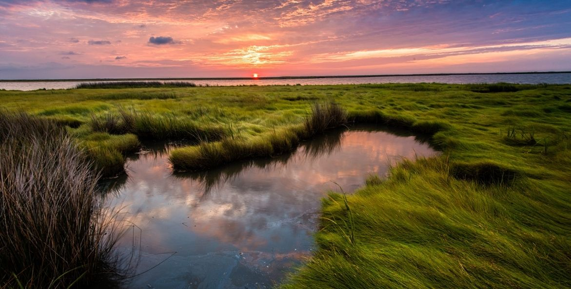 Bay Grasses Sunset - Bob Miller - 1171x593