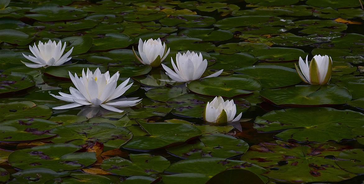 Bill Portlock Flowers