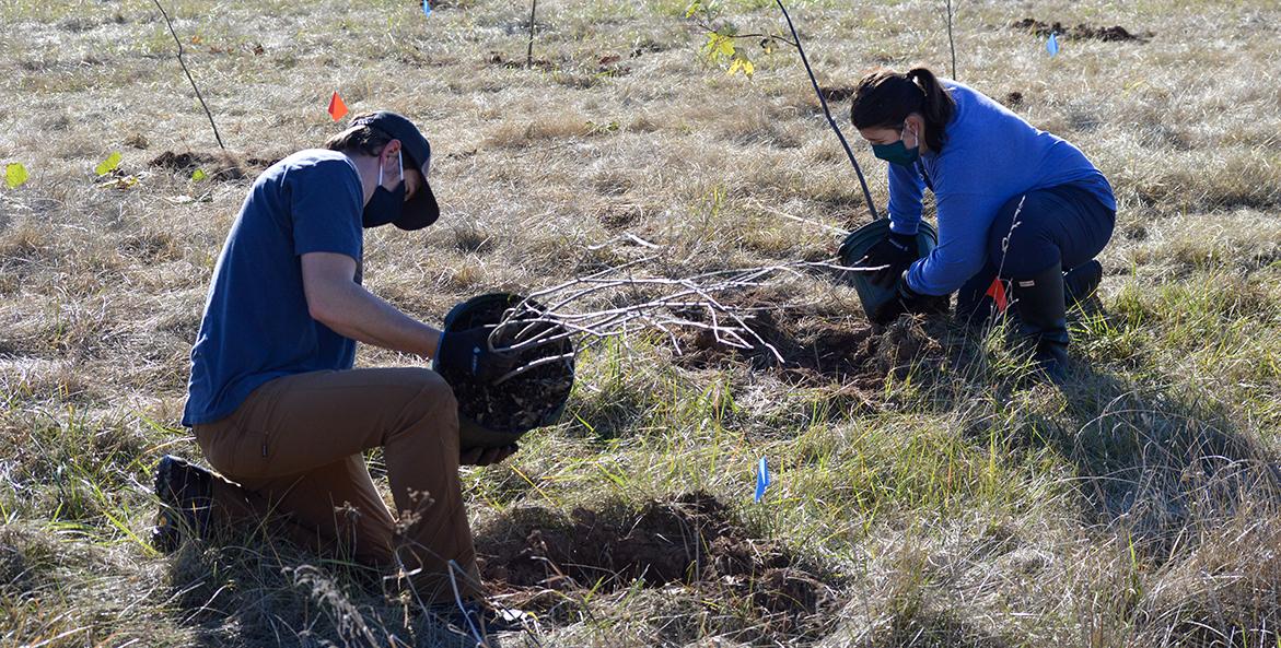 carrol county tree planting md-rebecca long-1171x593
