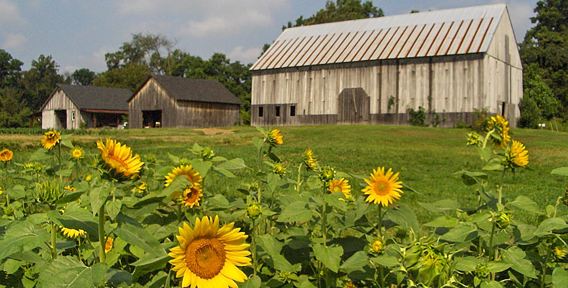 clagett barns with sunflowers RoshaniKothari 1171x593