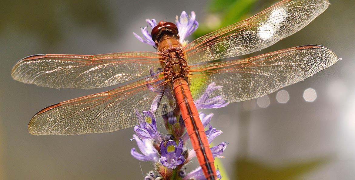 Dragonfly Kathleen Nutter 1171x593