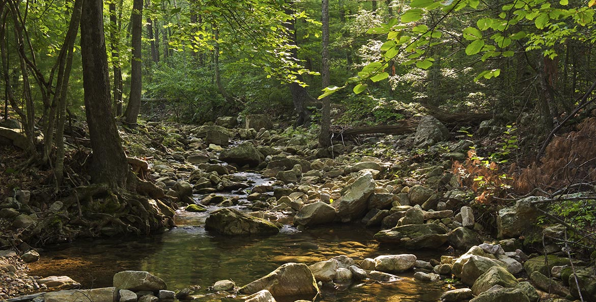 Forest stream Shenandoah National Park - Justin Black iLCP - 1171x593