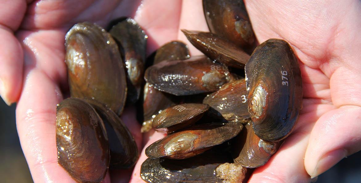 freshwater-mussels_kenny-fletcher.jpg