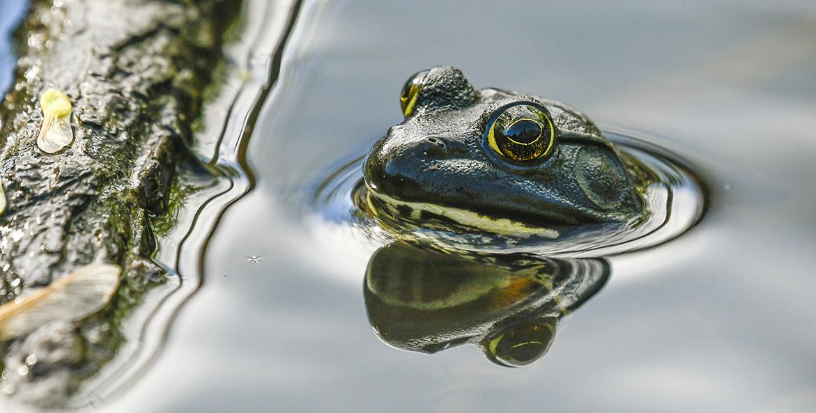 frog-jane-gamble-1171x593