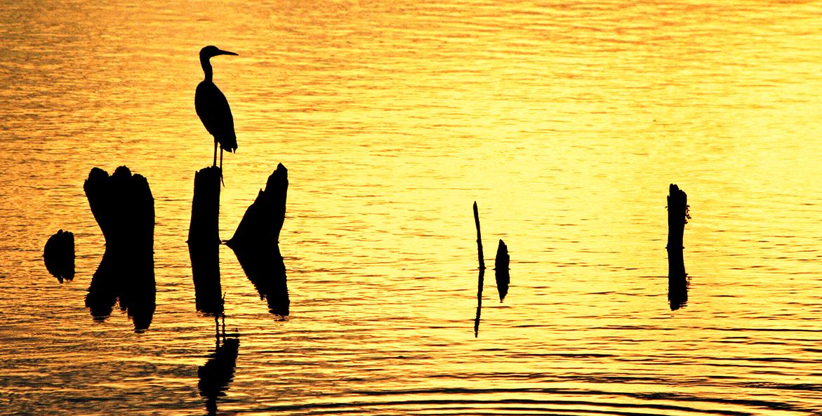 heron-at-sunset-mike-leonard-1171x593