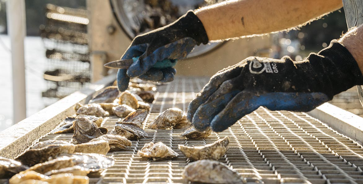 hollywood oysters inspection Greg Kahn 1171x593