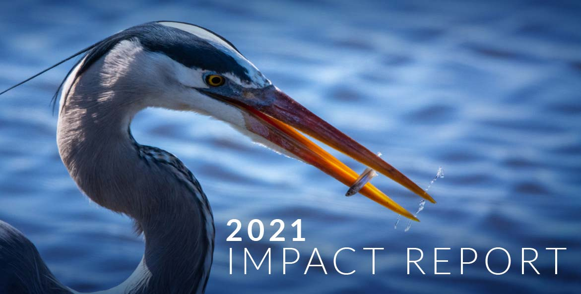 Close-up of a blue heron with text 2021 Impact Report.