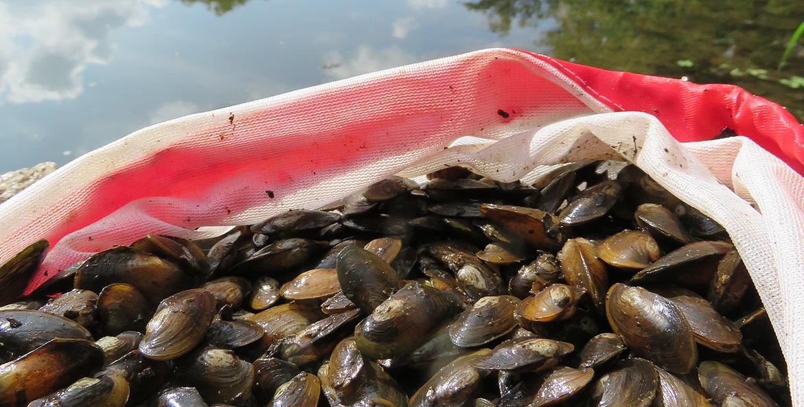 A bag filled with juvenile freshwater mussels sits in the bow of a boat on a Pennsylvania creek.