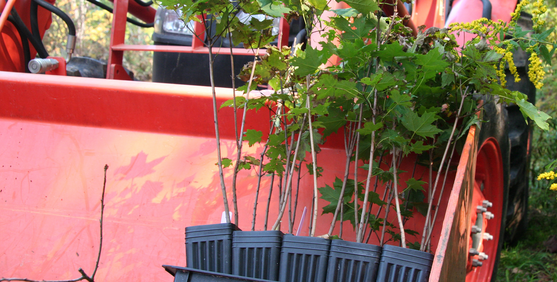 Potted tree saplings.
