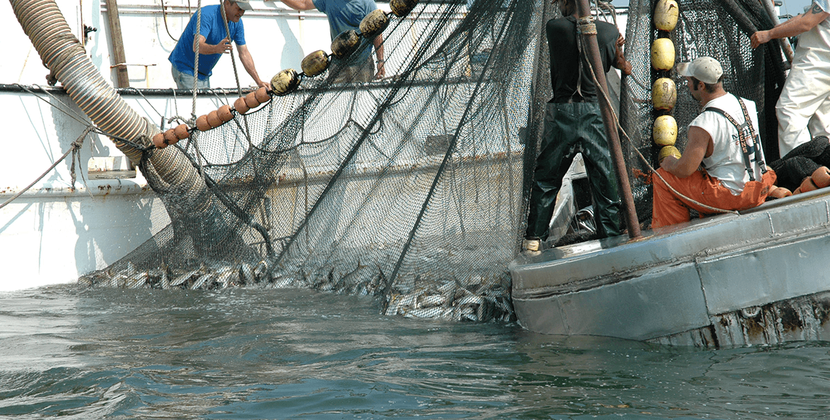 Commercial menhaden harvest