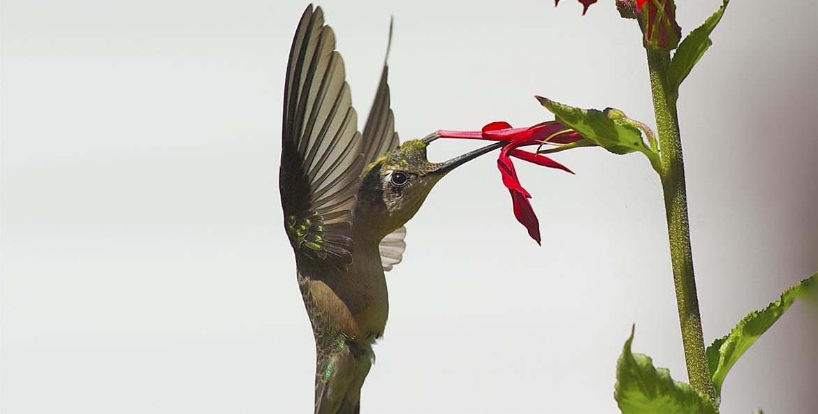 naturejournal Hummingbird BillPortlock 1171x593