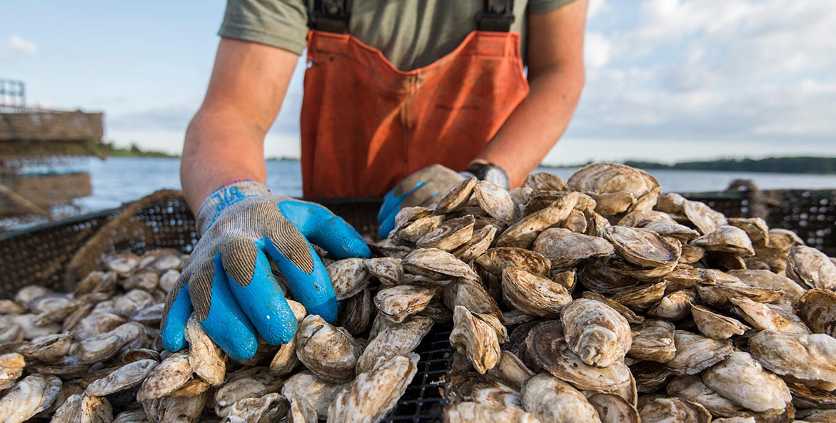 Orchard Point Oysters - Kate Livie - 1171x593
