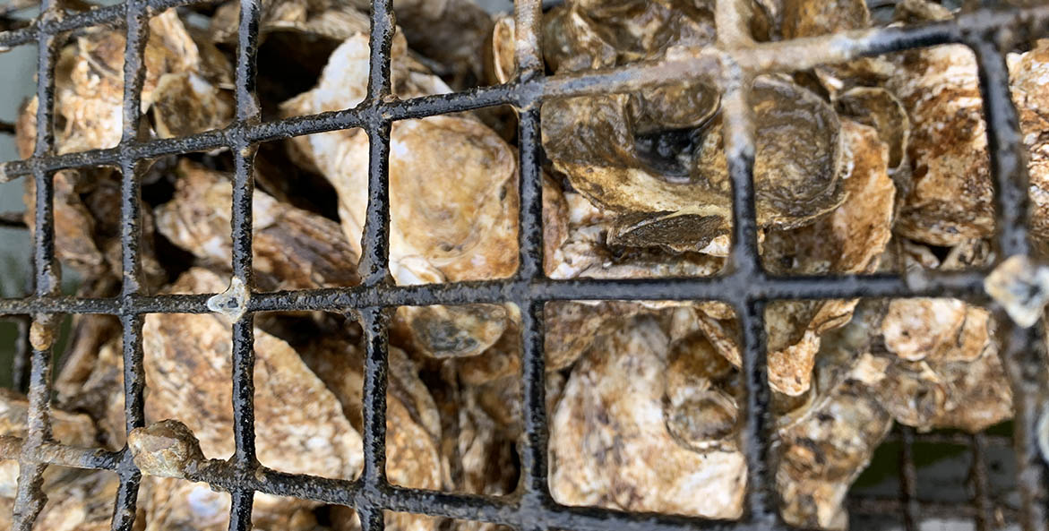 oyster-gardener_beverly-d_oyster-cage_1171x593.jpg