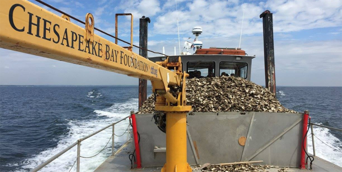 A boat motors across the water with a pile of oysters stacked on its deck.