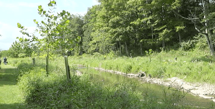 Tall grasses and young trees line a stream.