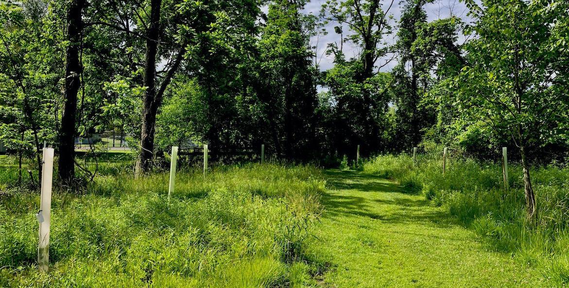 Paxton Creek planting-Anne Wain-1171x593
