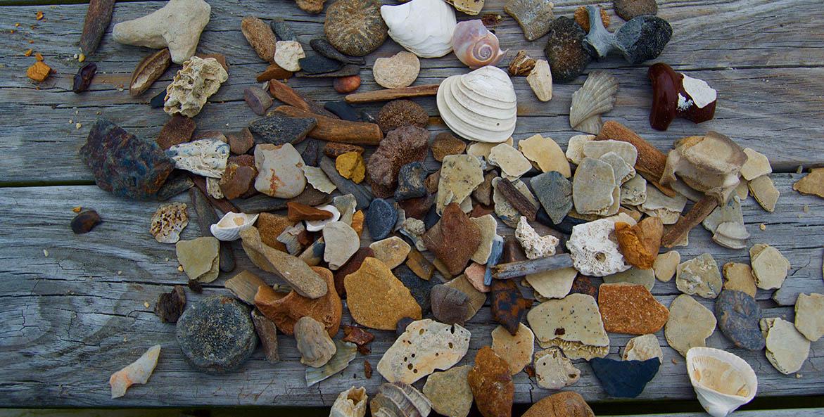 Shells, rocks, driftwood pieces piled on wood slats.