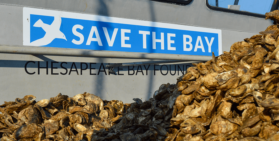 save-the-bay-oysters-rebeecca-long-1171x593