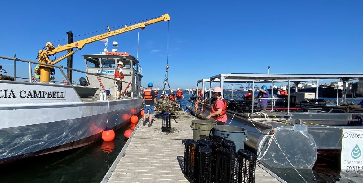 View down a pier toward the water, with a boat and large yellow crane on the left and covered barge on the right. The crane is lowering a bundle of oysters to a group of people wearing safety vests and hardhats on the pier, next to trash cans and black wire cages.