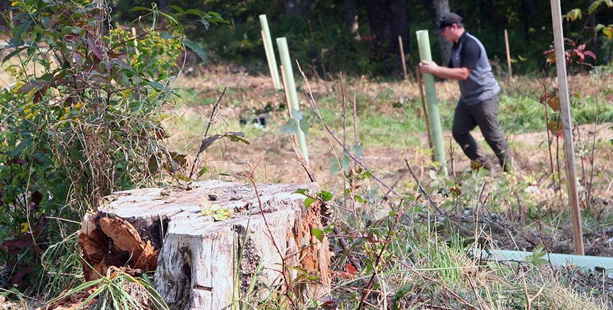 stump1-Holleran farm-BJ Small-1171x593