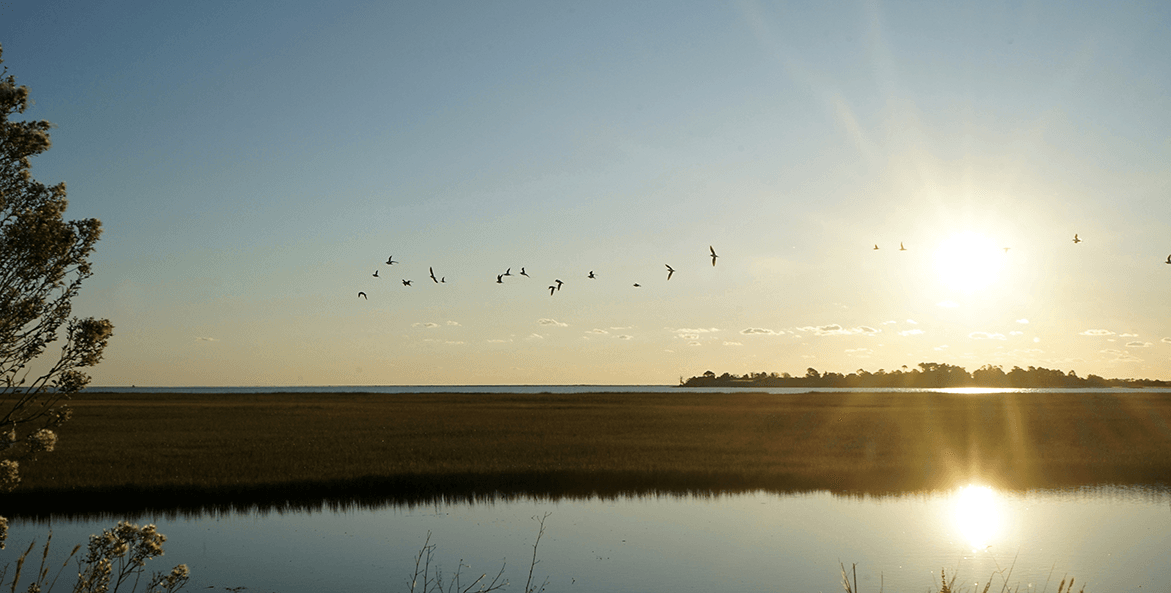 Birds are silhouetted as they fly across the rising sun by marsh land on Virginia's Eastern Shore