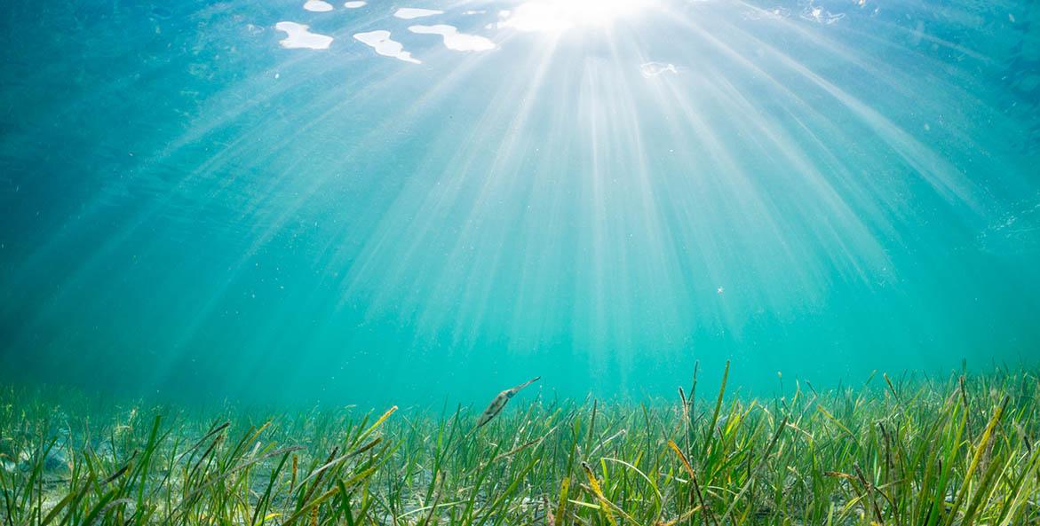 Underwater Grasses