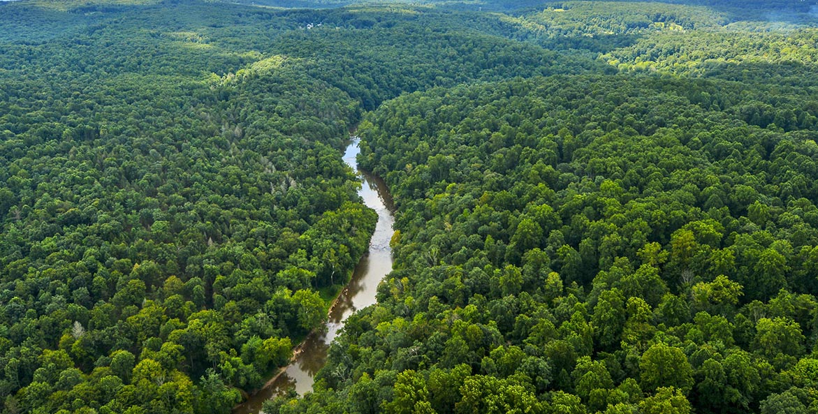 York County Forest_JohnPavoncello_1171x593