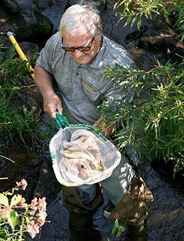 Dr. Mel Zimmerman holds a net with a brown trout.