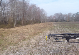 A photo of a buffer whihc protects the pristine Dragon Run Swamp from farm runoff.
