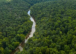 An aerial view of dense forests surrounding a ribbon of river.