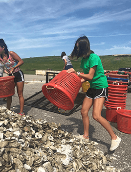 Laney empties a bucket of recycled oyster shells into a large pule of oyster shells that will be used by oyster gardeners.