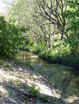 THe muddy creek side of Mill Dam Creek prior to it's restoration.