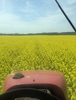 A photo of rapeseed blooming in Virginia seen over the nose of a tractor.