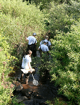 Students wade through a shallow creek surrounded by dense shrubbery.