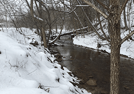 A creek runs through a snow covered riparian zone.
