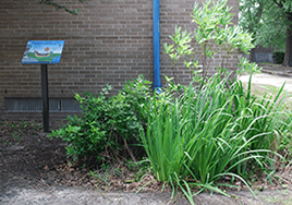 Tall grasses and bushes grow beside a brick wall. An educational plaque describing it stands to the side.