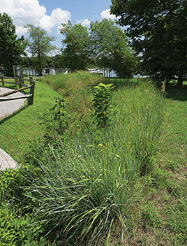 A native plant swale sits between a paved walkway and a river.
