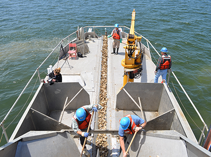 Restoration workers plant oysters from a boat.
