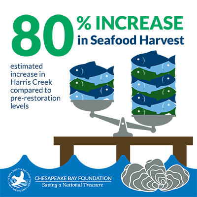 Oyster benefits infographic. Seafood harvest increased an estimated 80 percent in Harris Creek compared to pre-restoration levels.