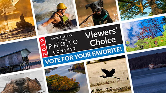 2019 Save the Bay Photo Contest Viewers' Choice - Vote for your favorite!