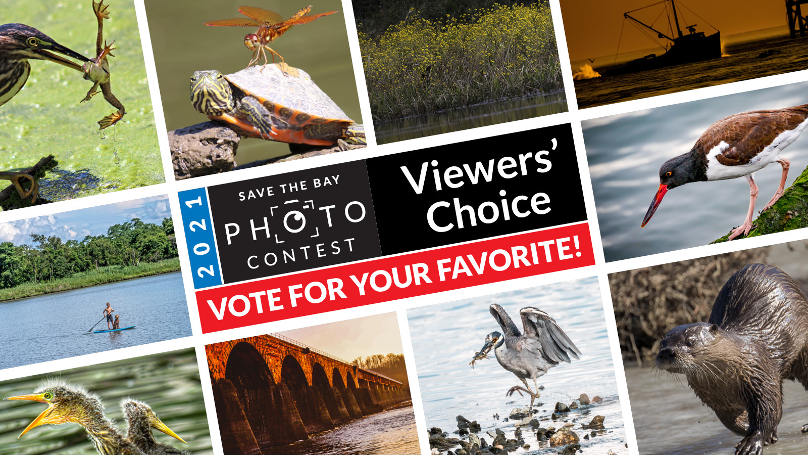 2021 Save the Bay Photo Contest Viewer's Choice - Vote for your favorite!