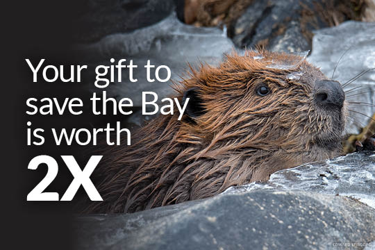 Your gift to the Bay is worth 2X. (Photo Credit: Edward Episcopo)