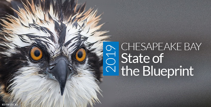 2019 State of the Blueprint