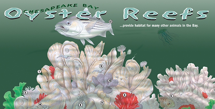 CBF_oyster-reefs-sign_695x352.png