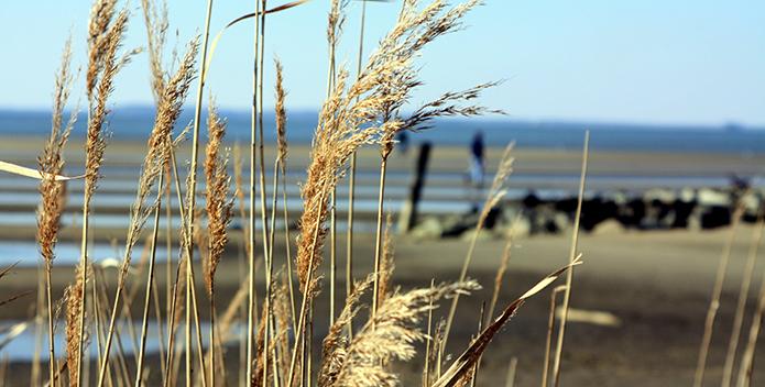 Low-Tide-off-Kent-Island_Michael-Rhian-Driscoll1_695x352.jpg