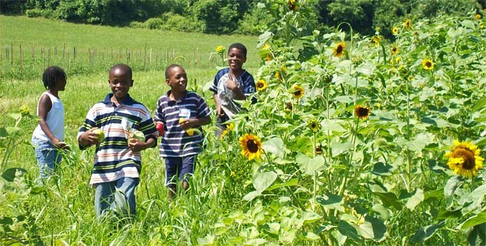 boys-in-sunflower-field_CBFStaff_695x352.jpg